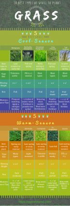 Types of grass. Grass is a popular pick for well-maintained gardens. In fact, you'll often see them in both rural and urban landscapes. But, what makes grass such a good choice? Well, grass is low-maintenance and fairly cheap compared to other plants. They also come with a lot of benefits. Finally, the most important use of grass is to the environment. Like any other plant, grass can improve the quality of the air we breathe. It purifies the air and filters dust. Let's no forget other pollutants. It can also prevent soil erosion and provide us quality water thanks to its root system. Various types of Grass can also reduce noise pollution by acting as a blanket that absorbs and deflects noise. The same goes for glare and light.