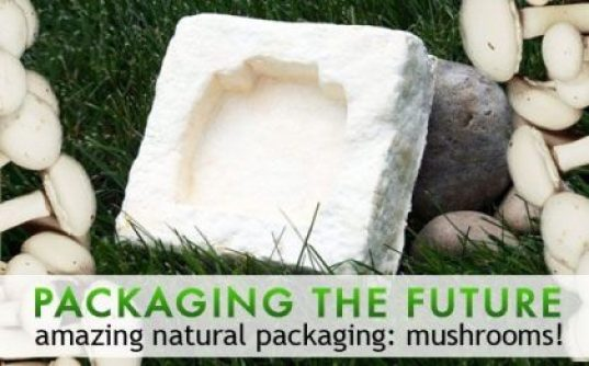 Bamboo and mushroom packaging
