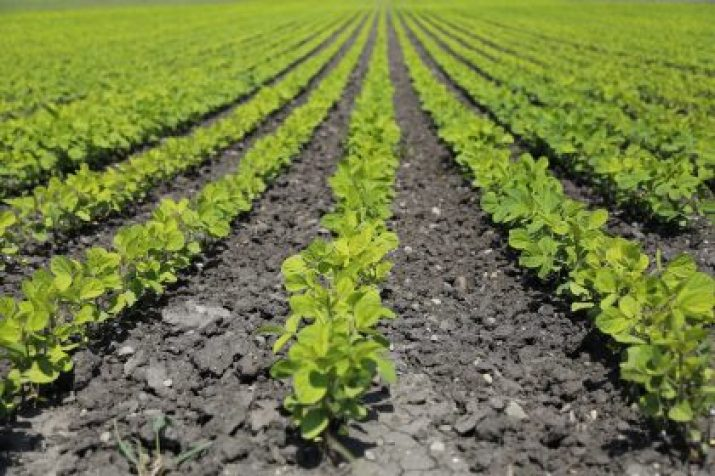 Technological Advances to Increase Sustainable Food Production