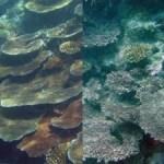 Clean up ocean acidification