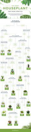Houseplant chart