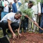 Planting Ethiopian trees in Ethiopia