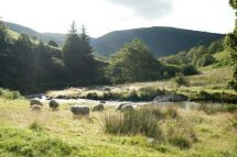Wales Lake Vyrnwy Nature Reserve (Image: Eleanor Bentall (rspb-images.com))