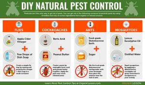 DIY Natural Pest control gardening efforts