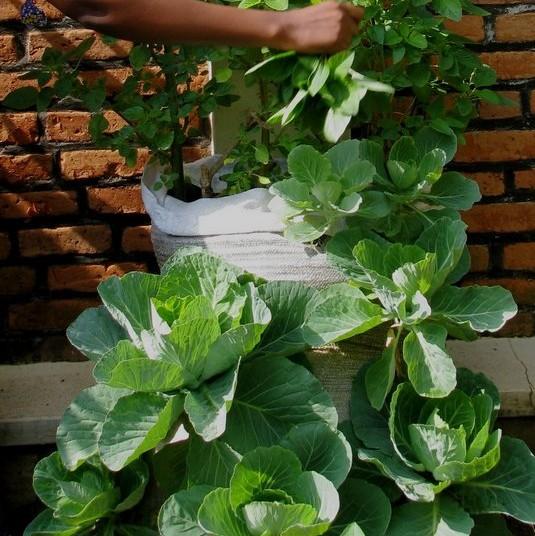 how to build a sack garden