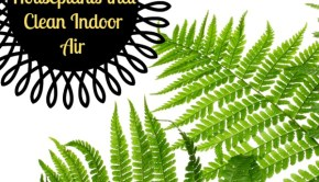 6 Perennial Houseplants that Clean Indoor Air