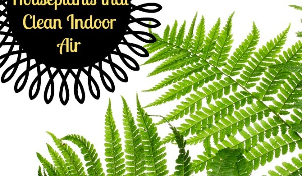 6 Perennial Houseplants that Clean Indoor Air