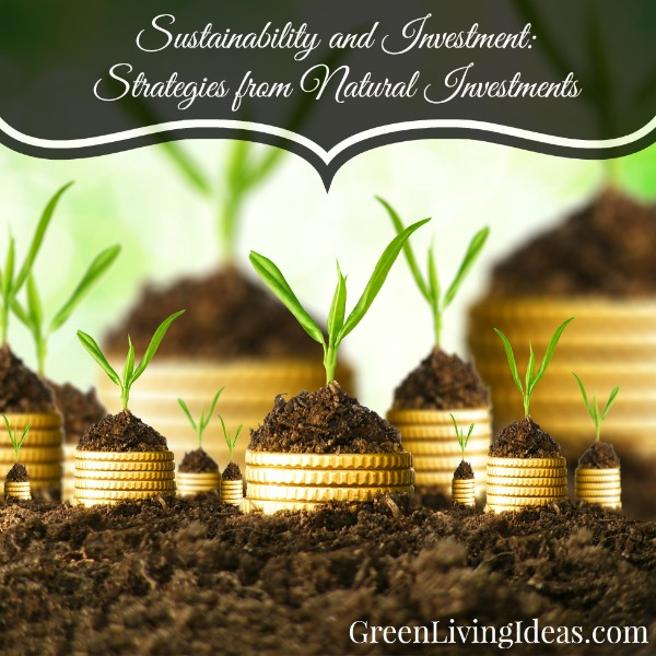 sustainability and investment