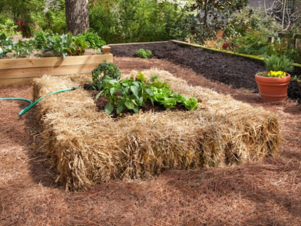 raised bed gardening hay
