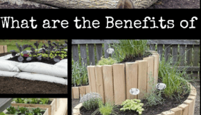 benefits of raised bed garden