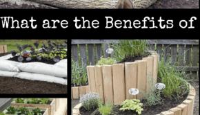 benefits of raised bed garden