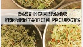 homemade fermentation projects