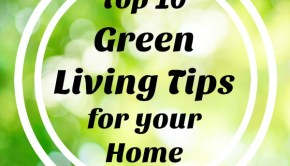 5230f54c3 Combating Dust the Green Way - Green Living Ideas