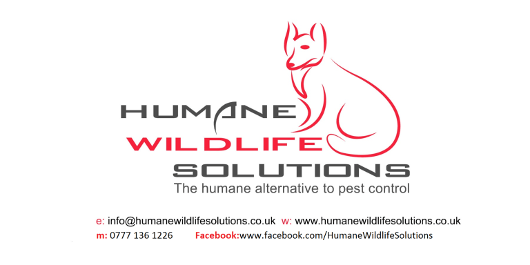 'Humane Wildlife Solutions' is changing the pest control industry one unharmed animal at a time