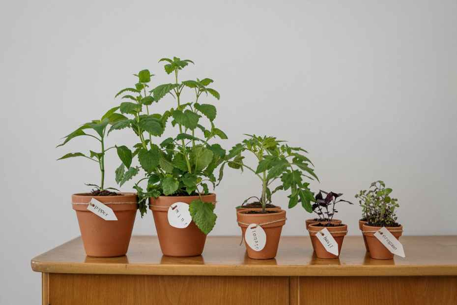 Growing food indoors. Sustainable living tips.