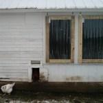Chicken Coop Rehab: Part 3