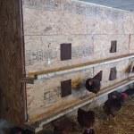 Community Nest Boxes