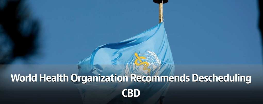 World Health Organization Recommends Descheduling CBD