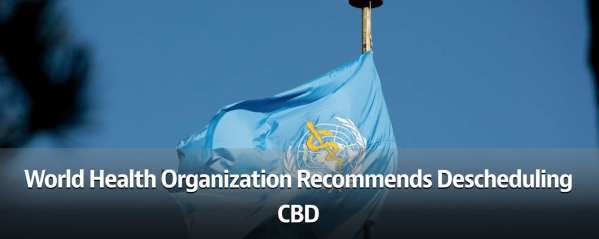 World Health Organization Recommends Descheduling CBD