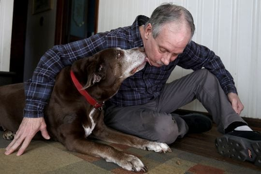 Brad Stottlemyer, 65 of Dearborn Heights with his 11-year-old chocolate lab mix Misty in their home on Thursday, March 7, 2019. Misty has bone cancer in her right front bone joint and the Essential CBD pet drops, a marijuana-based product has helped her not limp as much and become more active. The dog is also on medicine in pill form to help with her bone cancer.(Photo: Eric Seals, Detroit Free Press)