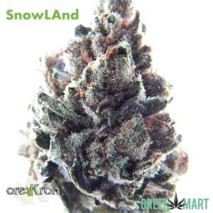 SnowLAnd by Orekron