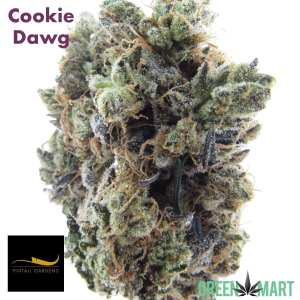 Cookie Dawg by Pintail Gardens