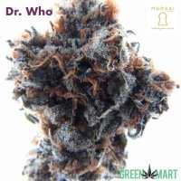 Dr. Who by Meraki Gardens