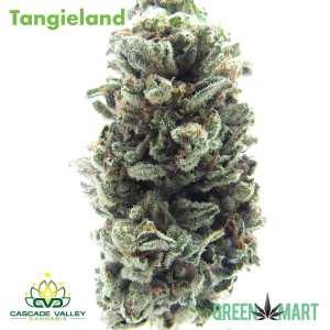 Tangieland by Cascade Valley Cannabis