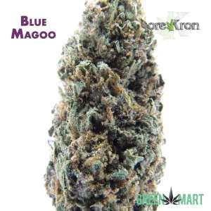 Blue Magoo by Orekron