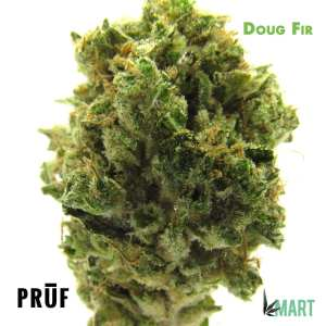 Doug Fir by Pruf Cultivar