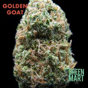 Golden Goat BlackBG