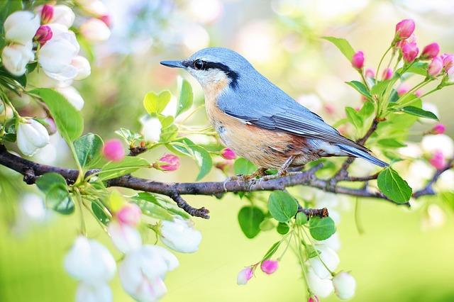 A Colder Spring