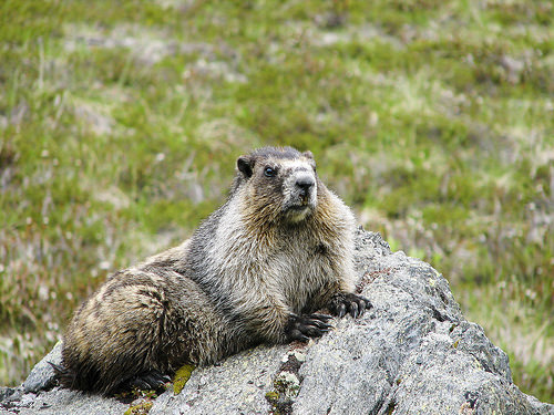 From The Apartment on Market Street: Groundhog