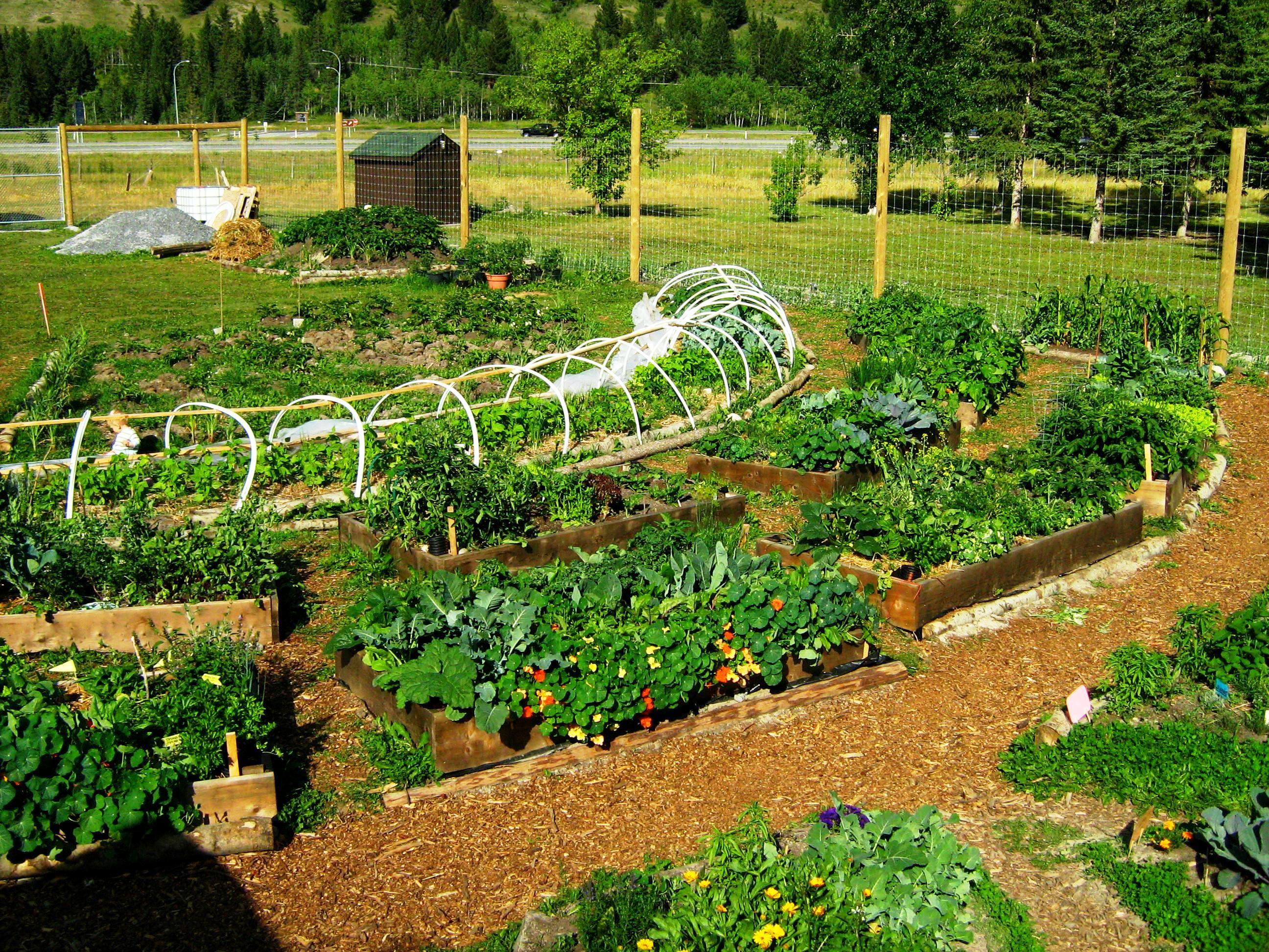 Permaculture Garden - GreenMyLife - Anyone can Garden on Backyard Permaculture Design id=62621