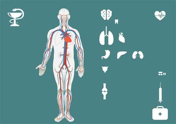지방간-알코올성지방간-비알코올성지방간-지방간 초기증상-지방간증상-지방간 치료법-지방간 치료