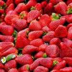 딸기 효능-딸기의 효능-딸기-산딸기