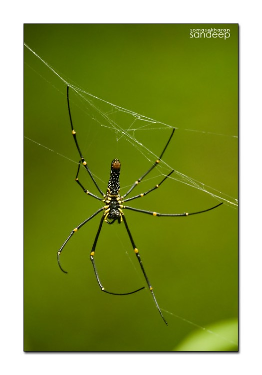 spider eaters essay The management of spider eaters essay california's strawberry industry spider eaters essay offers a case study of both the dependence on an imported peasantry that.