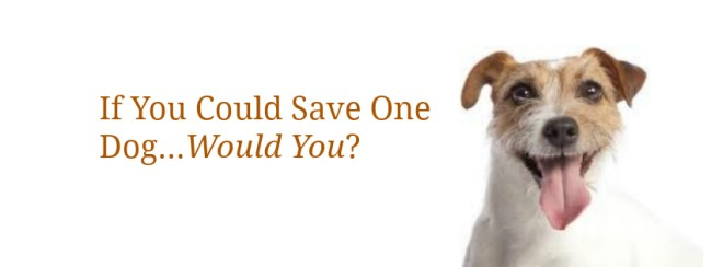if you could save one dog