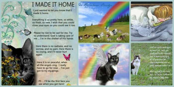 Rainbow Bridge for Cats – She made it Home