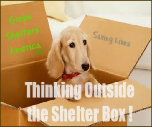How To Privatize America's Animal Shelters – Save Lives