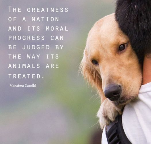 Ghandi Quote Picture Dog