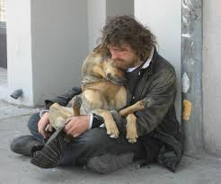 Why Do We have 8 Million Homeless Pets in America?
