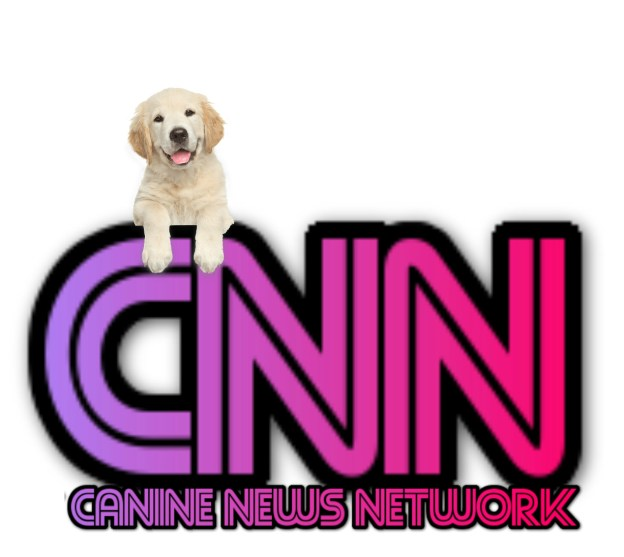 cnn canine news network