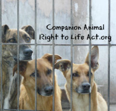 Companion Animal Right to Life Act Join on Facebook