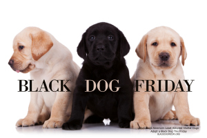 BLACK DOG FRIDAY VIDEO