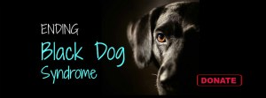 Black Dog Syndrome Killing America's Black Dogs
