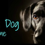 Ending Black Dog Syndrome in America