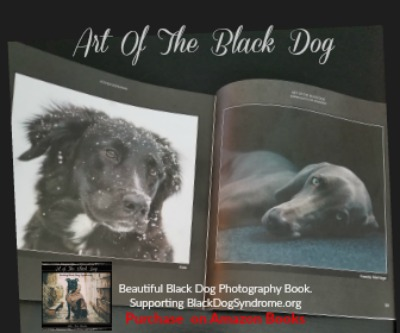 Book Review Art Of The Black Dog
