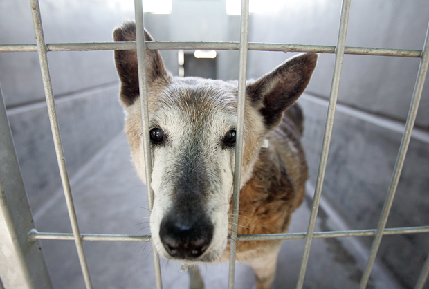 destroying America's animal shelter system
