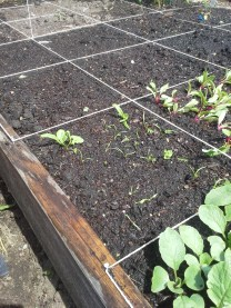 The carrots are slowly making their way up (plus a TMT!)